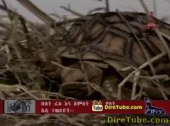 Ethiopian Related Entertainment News - Mar 13, 2011