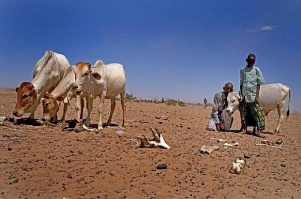 U.S. $ 245 mln Needed to Provide Emergency Assistant for Drought Affected Ethiopians