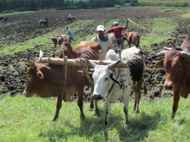 Digital Soil Fertility Map to Tackle Low Farm Productivity in Ethiopia