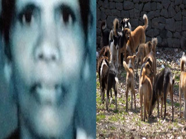 Tragic Mother eaten By 100 stray Dogs