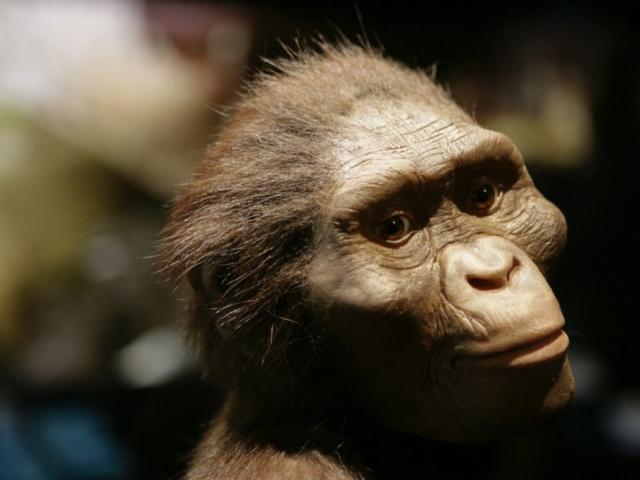 New evidence that Lucy, our most famous ancestor, ha...