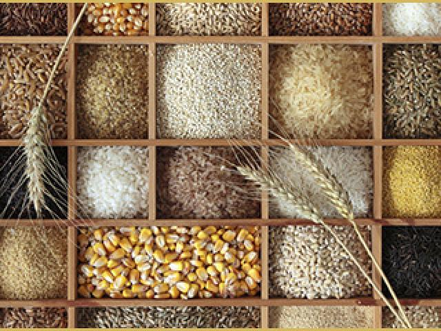 Ethiopia Interested to Buy Grains from Kazakhsta