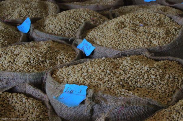 Ethiopian Jimma Coffee got 95 Rating