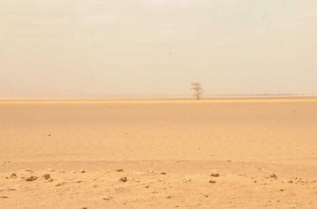 WFP Call for More Aid is Needed to Tackle Drought in Ethiopia