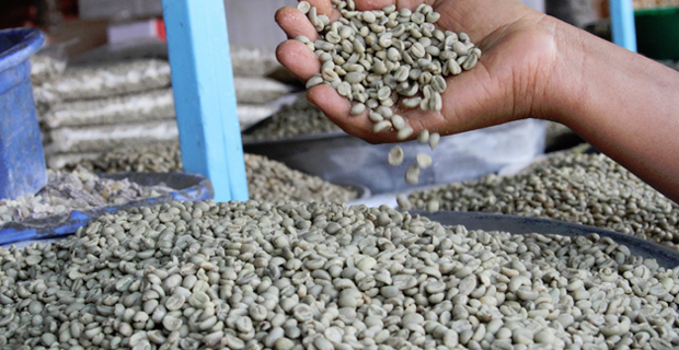 ECX to Use Supply Chain Management System for Ethiopian Coffee Market