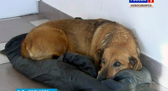Loyal dog waits for owner who will never return at hospital for two years