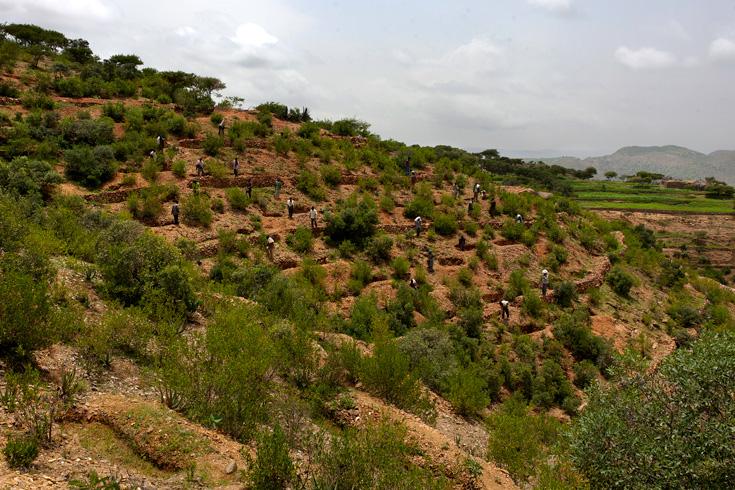 Development Partners Ready To Support Ethiopia's Green Economy
