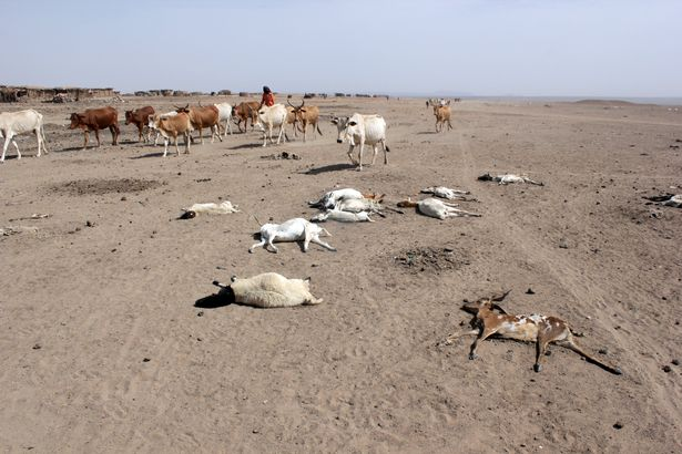 FAO Announced It Needs US 50 mln to Address Drought in Ethiopia