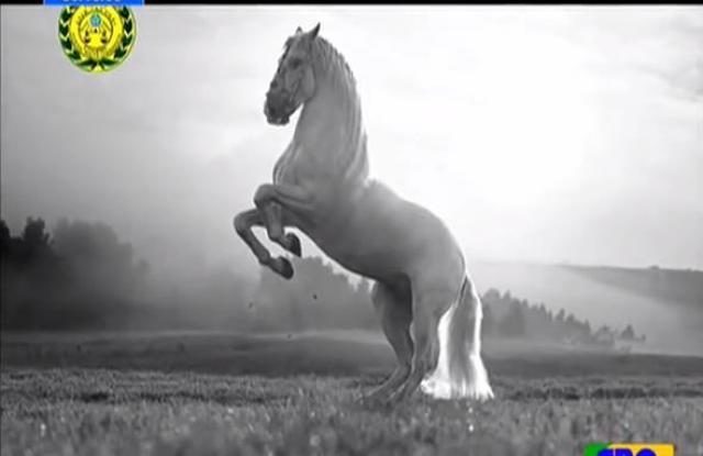 "Ethiopia: The story of ""Shewa"", the legendary horse"