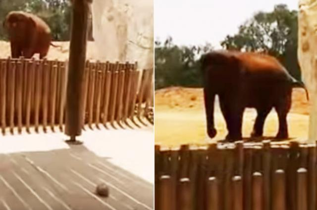 Elephant kills 7 year old girl throwing stone at her head in Morocco zoo