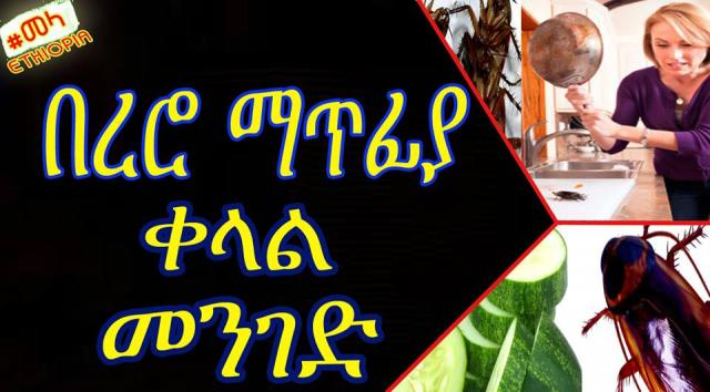 ETHIOPIA - Get Rid of Cockroaches from Your Homes Forever በረሮ ማጥፊያ ቀላል መንገድ