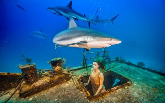 Snappy Dresser: Model Swims With Sharks On Fashion Shoot - bTV
