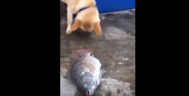 Dog helping fish