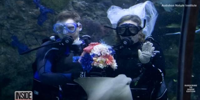 Couple Gets Married Surrounded By Fish In Underwater Wedding at Aquarium