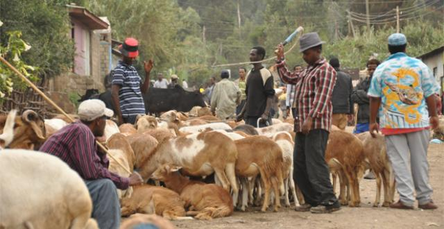 Ethiopian Christmas Gena Holiday Market Report
