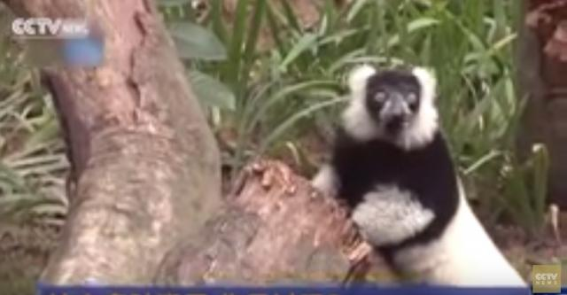 Unusual Monkeys in Guangdong Province