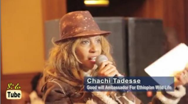 Chachi Tadesse: Good Will Ambassador For Ethiopian Wild Life