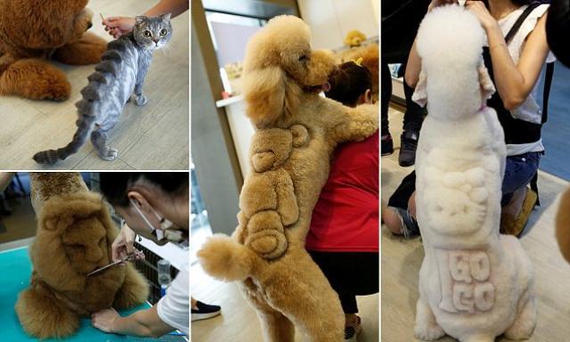 Pet grooming: Taiwan pet salon shaves unique designs into your furry little friends - TomoNews