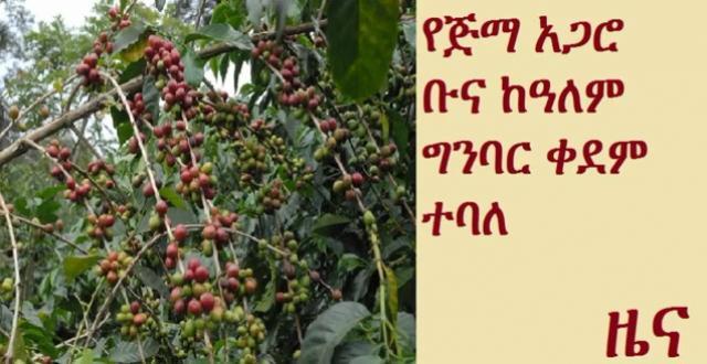 Ethiopian Jimma Agaro coffee earns 95 per cent rating