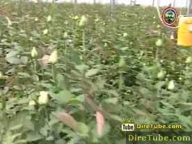 Oromia - TV - Chiro's Development - Feb 8,2011