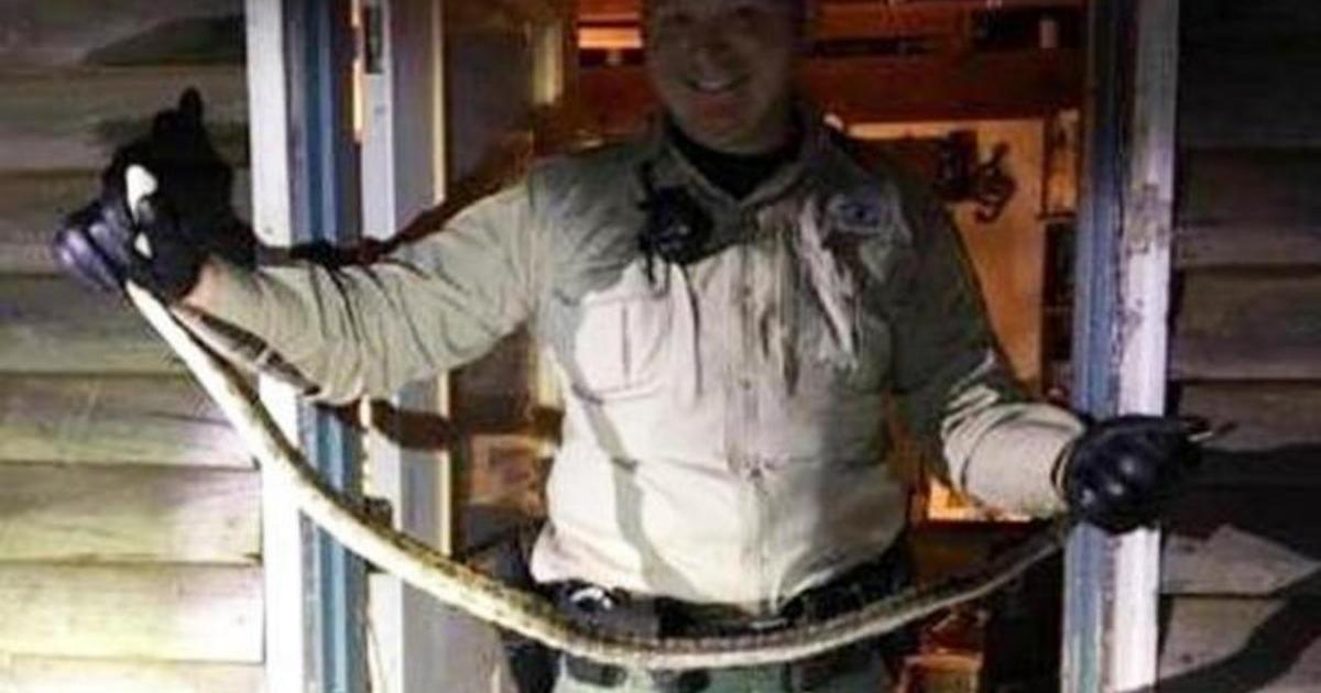 Tennessee woman wakes to find snake in her bed