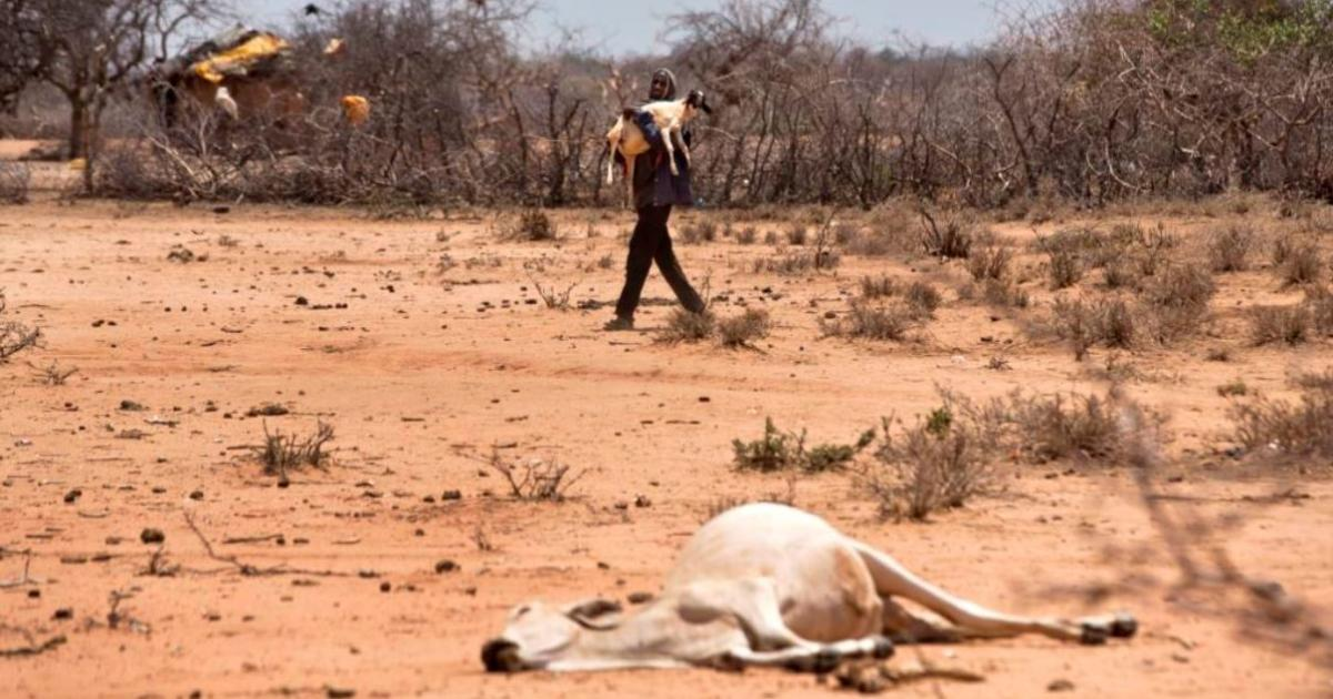 Alarm as Drought Kills Two Million Livestock