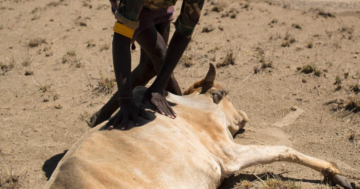 Two Million Animals Lost to Drought in Ethiopia - FAO