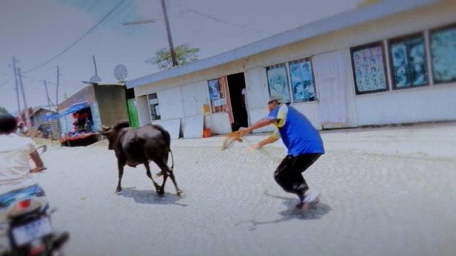 EBS Fasika Special Show: Yekeraw Cow Boy ( Figa Telafewoch)