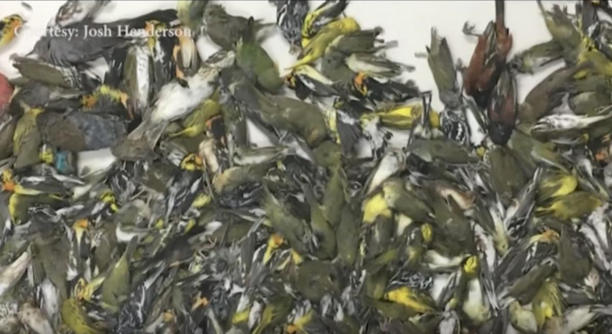 Hundreds of birds die after flying into Galveston skyscraper