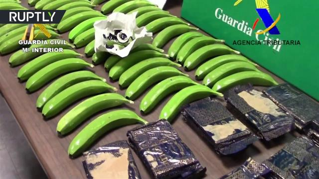 That's Bananas! Spanish police find 17 kilos of cocaine inside fake fruit