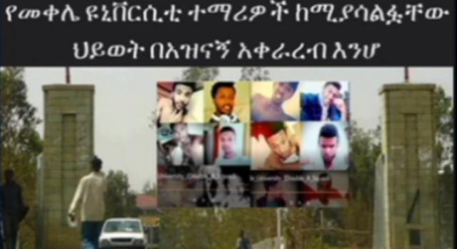 ETHIOPIA - Habesha vine at Mekelle University