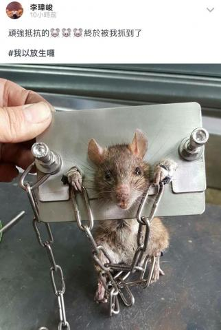 Man shackles rat in tiny stocks after catching it scurrying around his house
