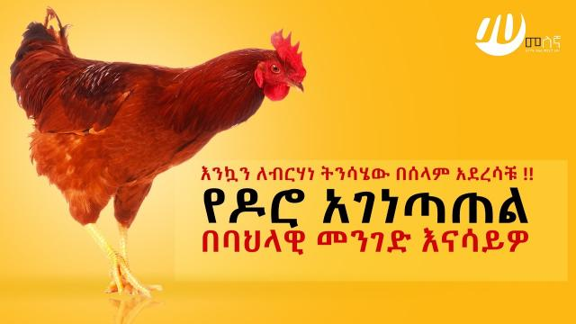 How to prepare Chicken Doro Ethiopian style - Melegna