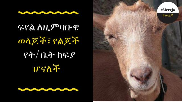 School Fees Now Payable with Goats in Zimbabwe