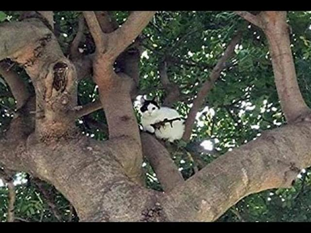 Newport Police Called To Reports Of A Cat Up A Tree Armed With A Rifle