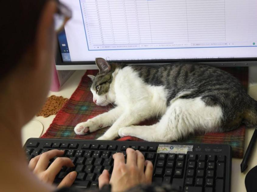To reduce work stress, Japan firms turn to office cats, dogs and goats