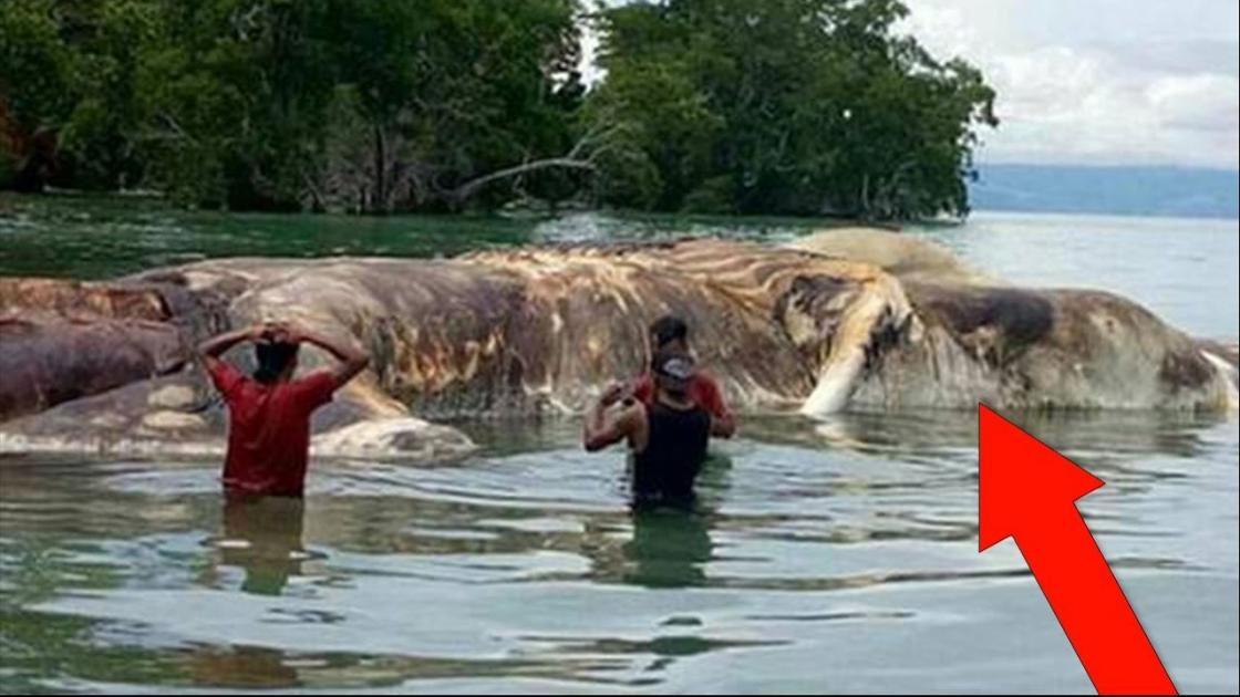 Huge Mystery Creature Washes Up On Beach