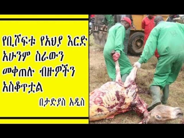 Tadias Addis - About Donkey slaughter house in Ethiopia
