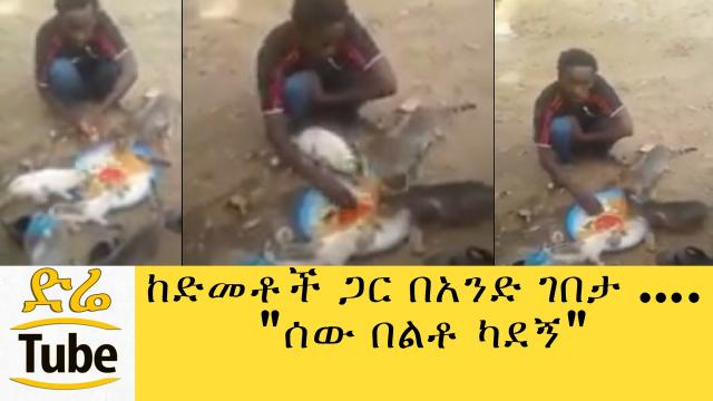 Ethiopian Man Eating Together with Cats