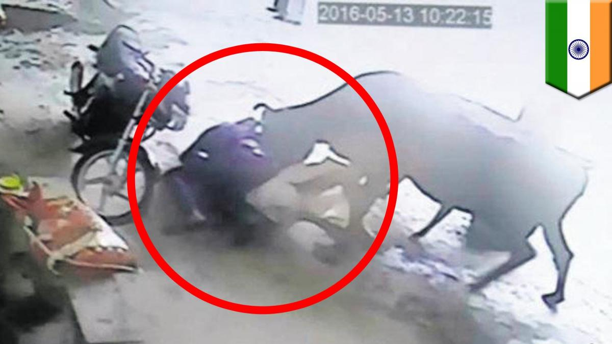 Brave cow attacks two men in attempt to rescue girl from being murdered in India