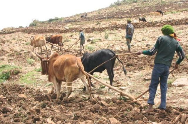 ETHIOPIA - Farm Animals used to have leave days and compensation why?
