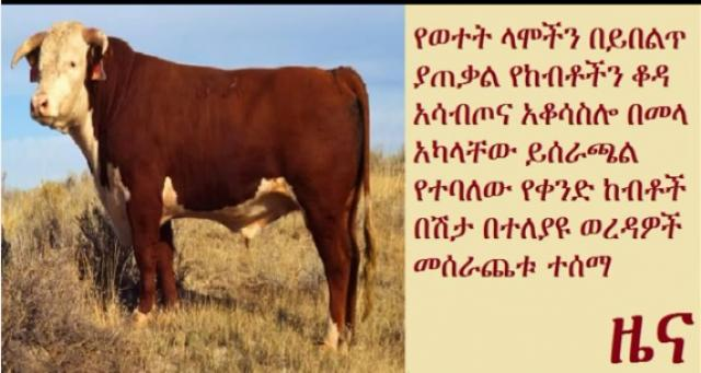 Cattle disease spread in some parts of Ethiopia